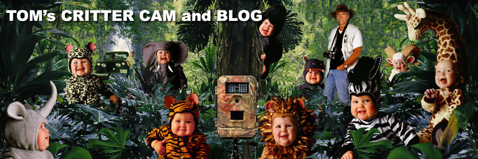 Tom Arma\'s Crittercam and blog with baby photographer Tom Arma and babies dressed as animals